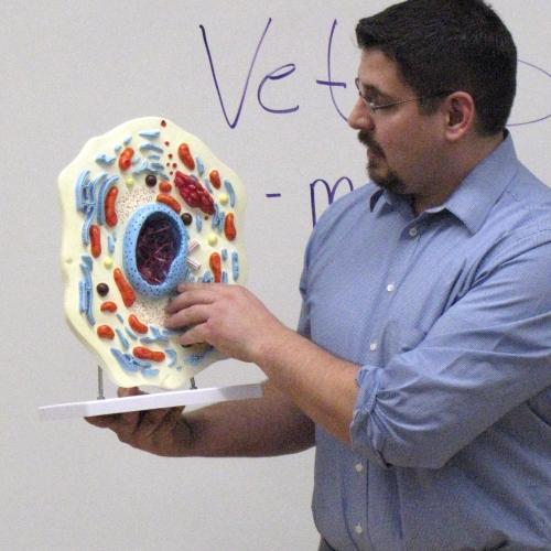 Animal Cell Model Teacher
