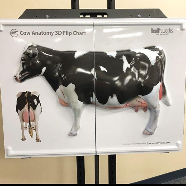 Cow Anatomy 3D Flip Chart