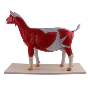Goat Model