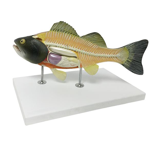 Realityworks fishmodel