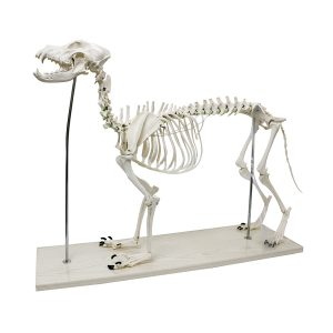 Realityworks Large Dog Skeleton