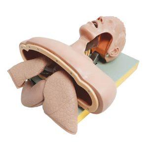 Intubation Sim