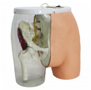 Buttocks Dorsogluteal Intramuscular Injection Trainer