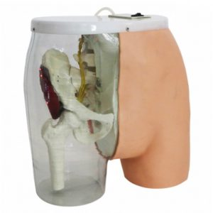 Buttocks Dorsogluteal Intramuscular Injection Trainer