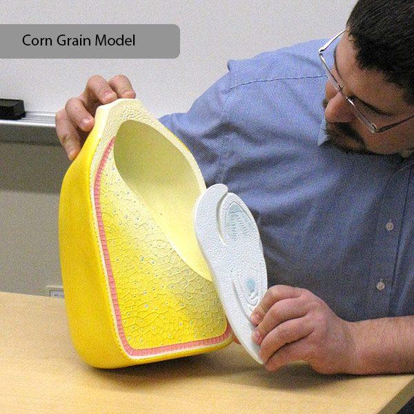 Corn Grain Model