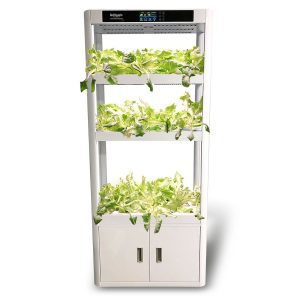Plant Producer Hydroponics Educational System