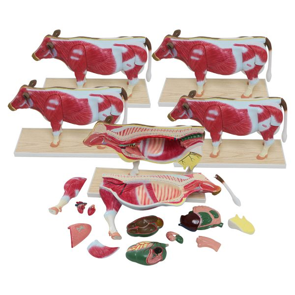 Set of 5 Small Cow Models