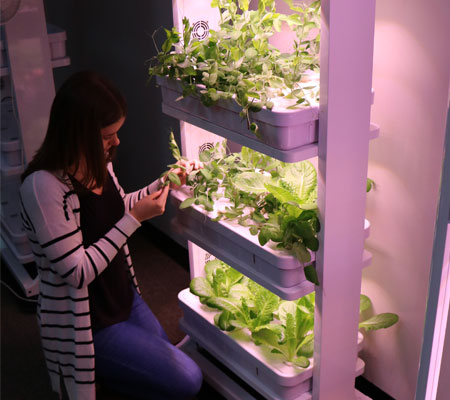 Student using hydroponics systems