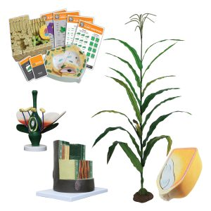 Plant Systems Pathway Package