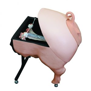 Swine Artificial Insemination Simulator